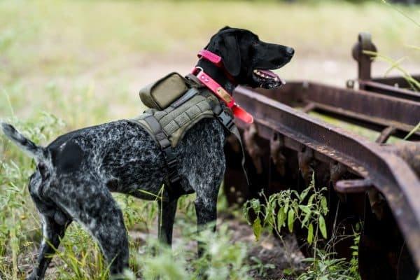 SafeShoot Defender on a dog 2