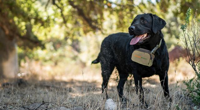 SafeShoot Defender on a dog